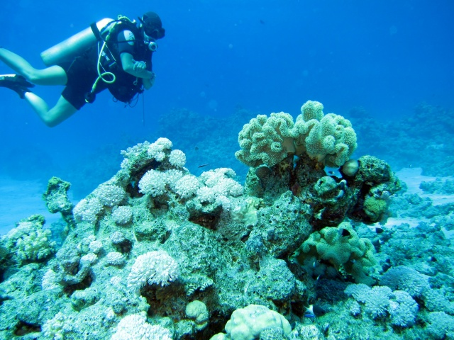 Photo: Scuba Diver behind Coral Block by Alex M.