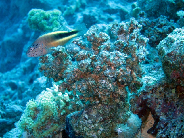 Photo: Fish sitting on coral block by Alex M.